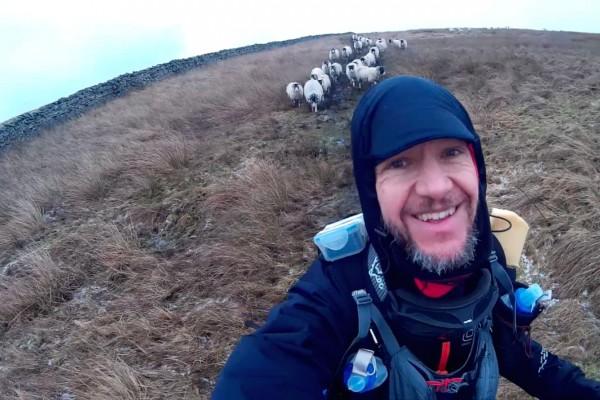 Followed by sheep